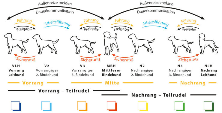 Hundeverein Grafik Rudelstellung Kopie
